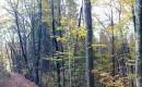Nižinski hrastov gozd naprej od Francetove jame