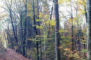 Naprej od Francetove jame nižinski hrastov gozd začne prehajati v predgorski bukov gozd