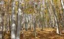 Predgorski bukov gozd pod Sv. Ano